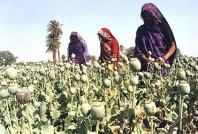 opium_cultivation_bhopal_2007068